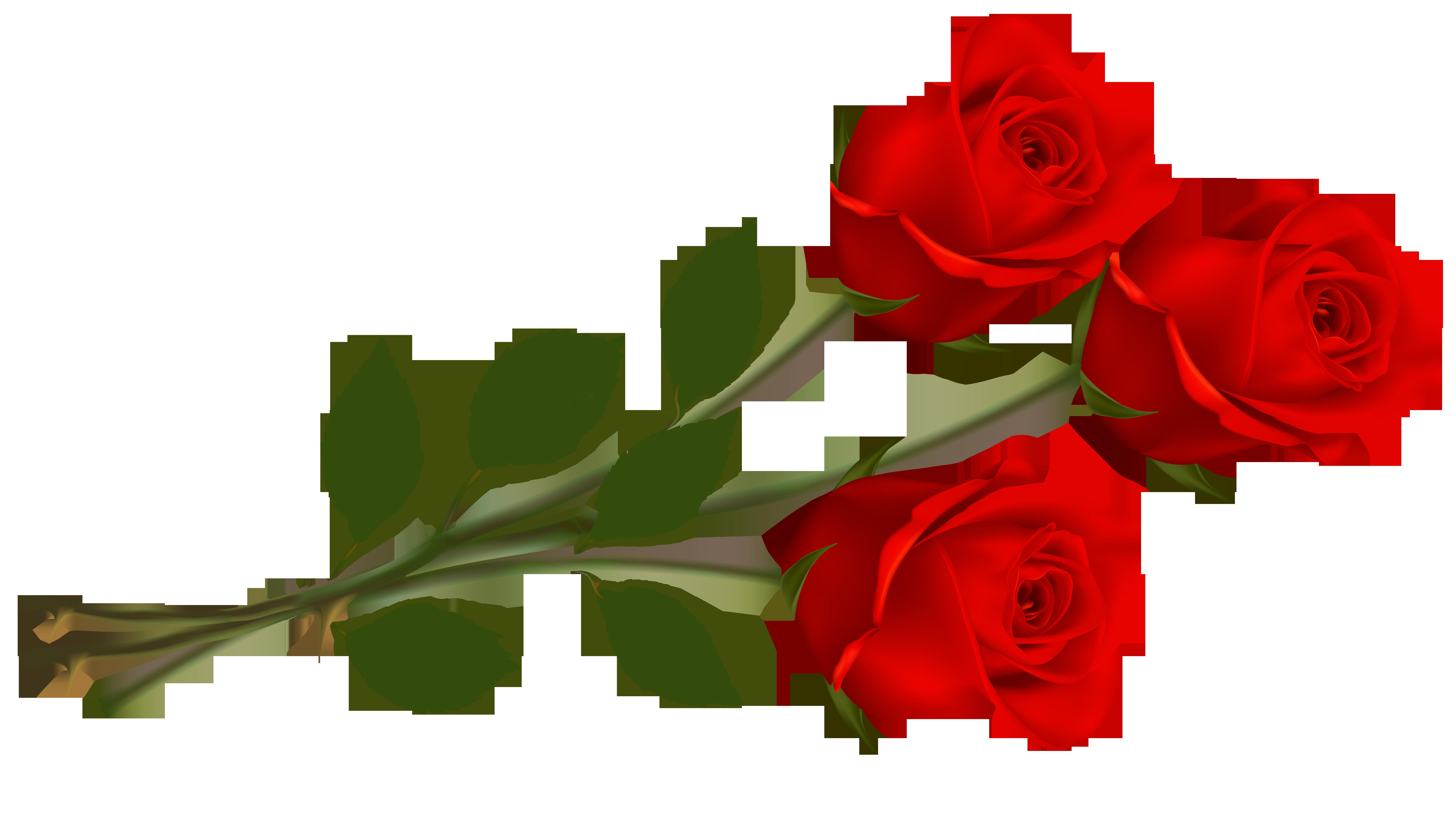 clip art red rose roses