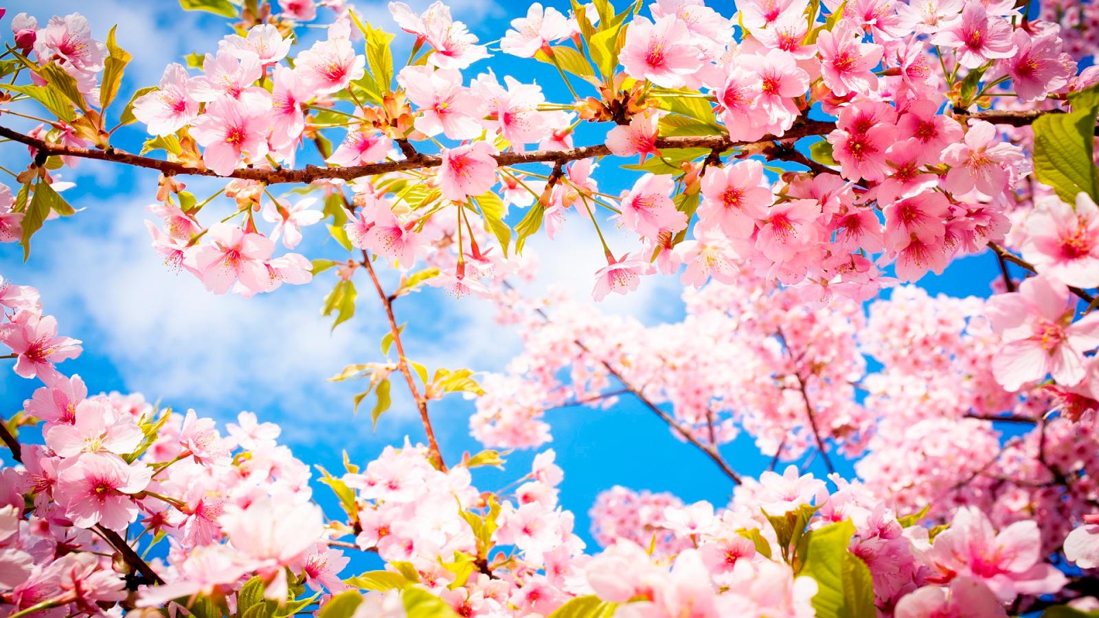 Fondos De Pantalla De Flores Hermosas Para Fondo Celular: Fondos De Flores Hd En Hd Gratis Para Poner En El Celular