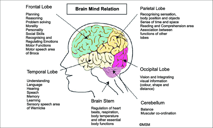 brain association witht he senses - Google Search | Brain ...
