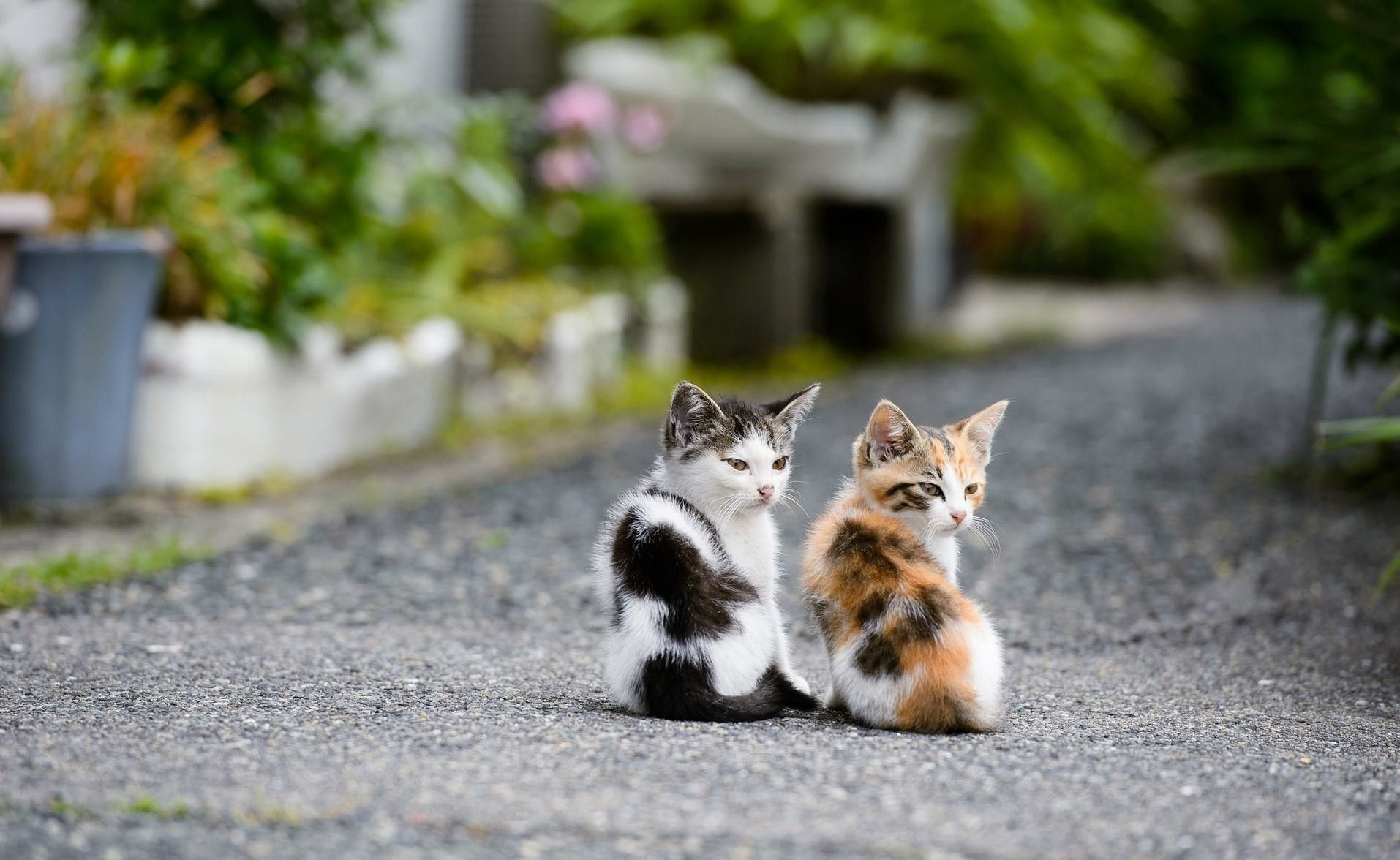 Buy Healthy Kittens Cats For Sale In India Cats For Adoption In