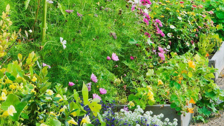 kitchen garden  raised garden diy trellis landscape design