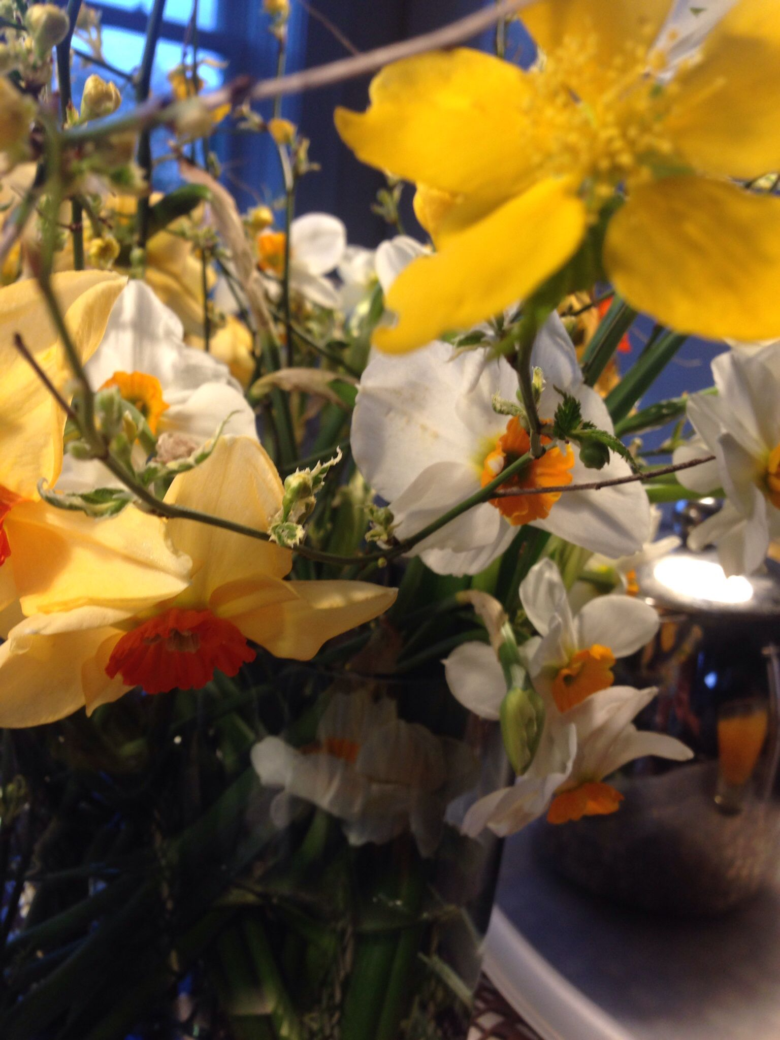 Bulb to flowers grown at DIG Nursery. Growing flowers