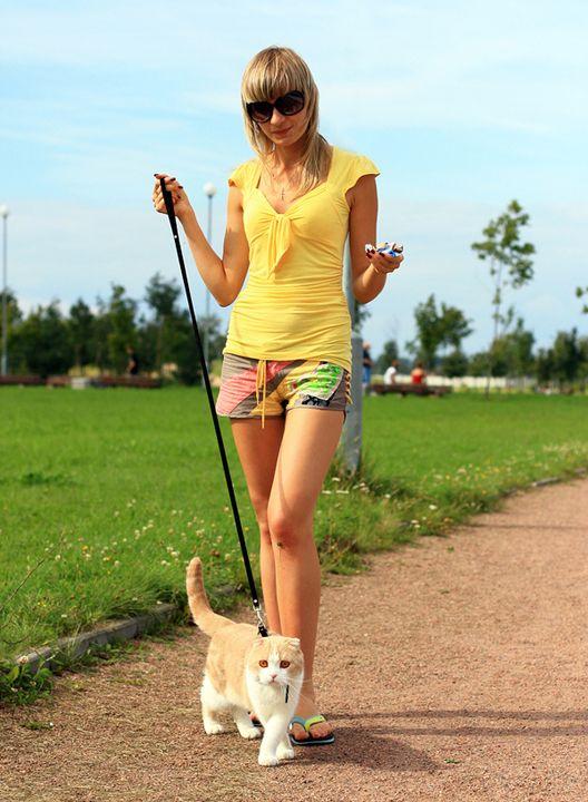Stray on a leash