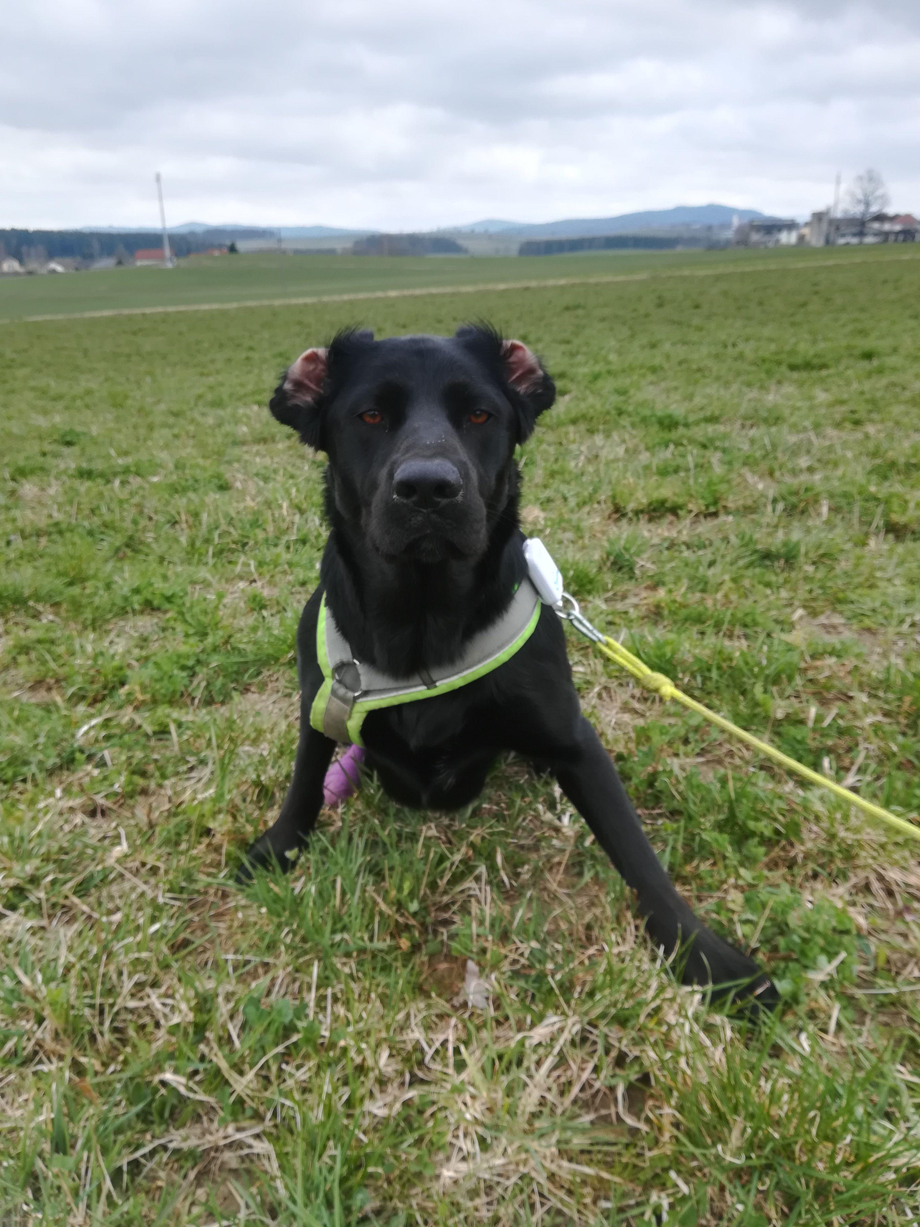 Keinohrhund Jackaufreisen Animals Dogs