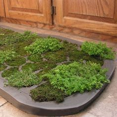 How To Make A Moss Shower Mat With Images Moss Shower Mats