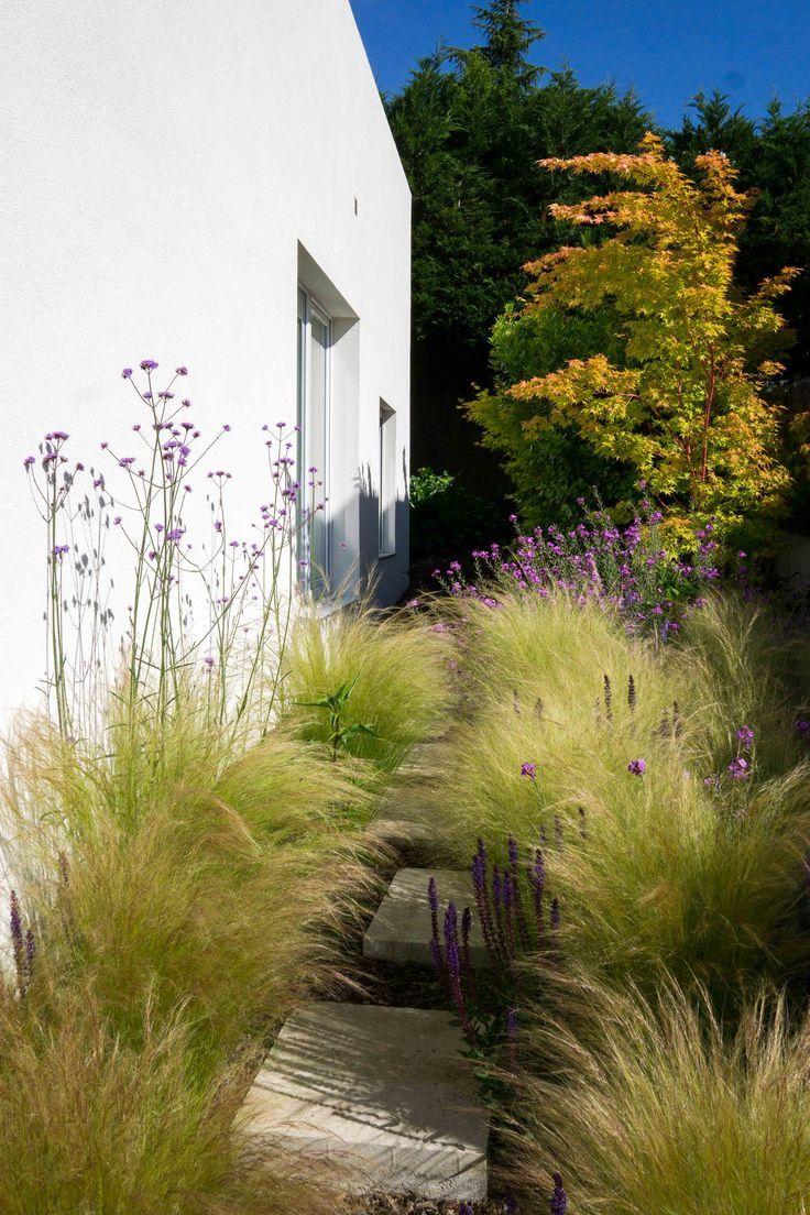 Photo of Hidden path with Salvia Nemorosa Caradonna, Verbena Bonariensis and Stipa Tenuis…