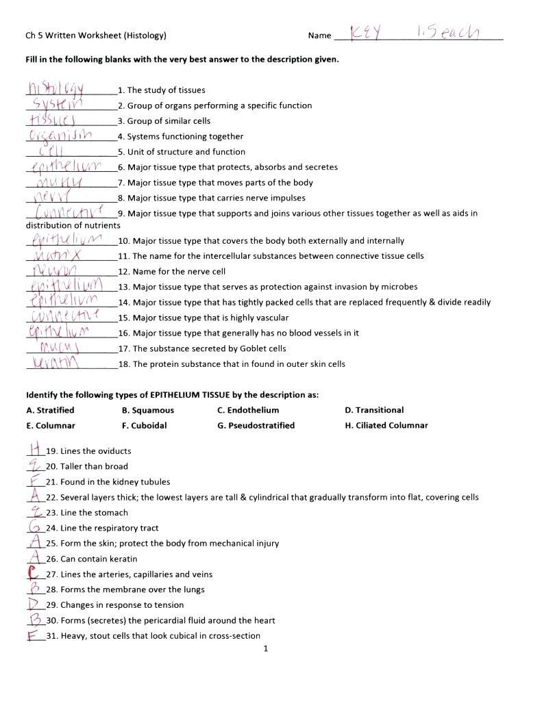 Anatomy And Physiology Coloring Workbook Answer Key Elegant