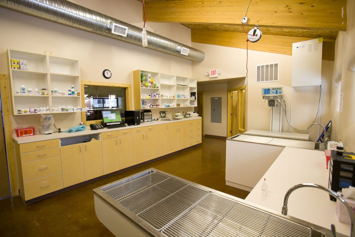 Medical Suite Wellness clinic, Wellness center, Design