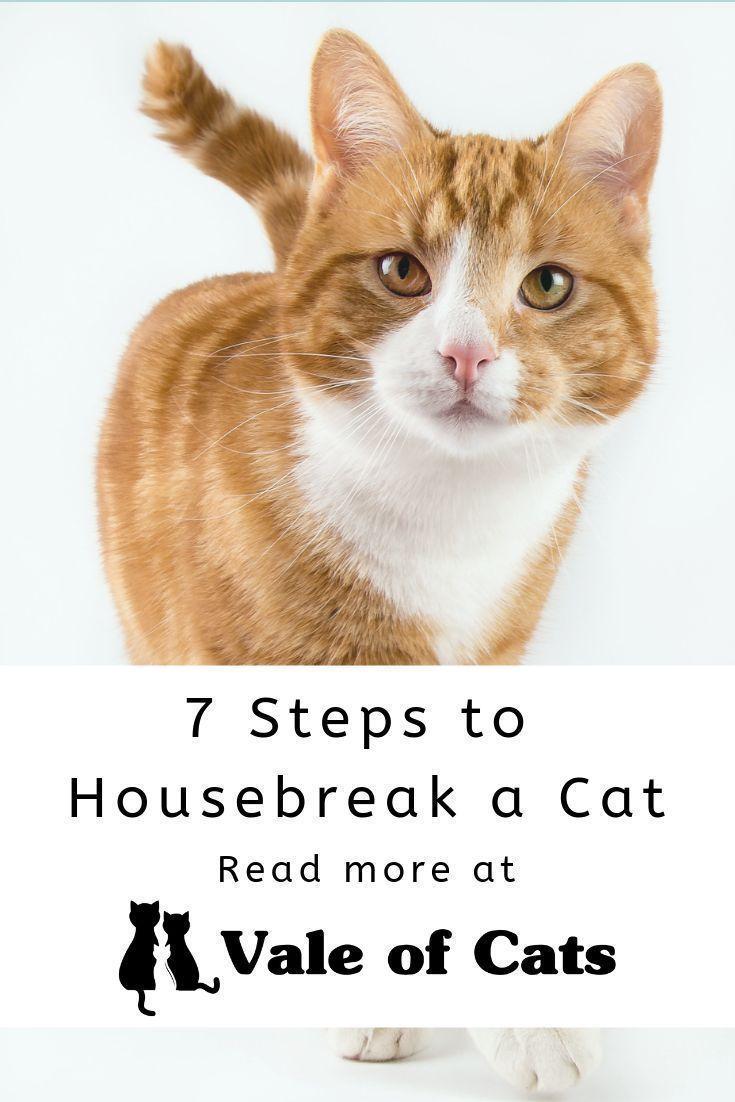 7 steps to housebreak a cat small cat breeds cat breeds