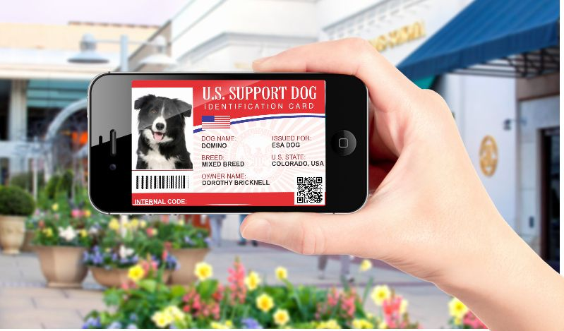 Service Dog Id Card Template Free Download Inspirational