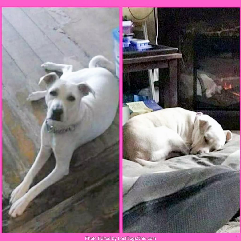 Lost Dog Female Euclid Oh Usa 44132 With Images Losing A