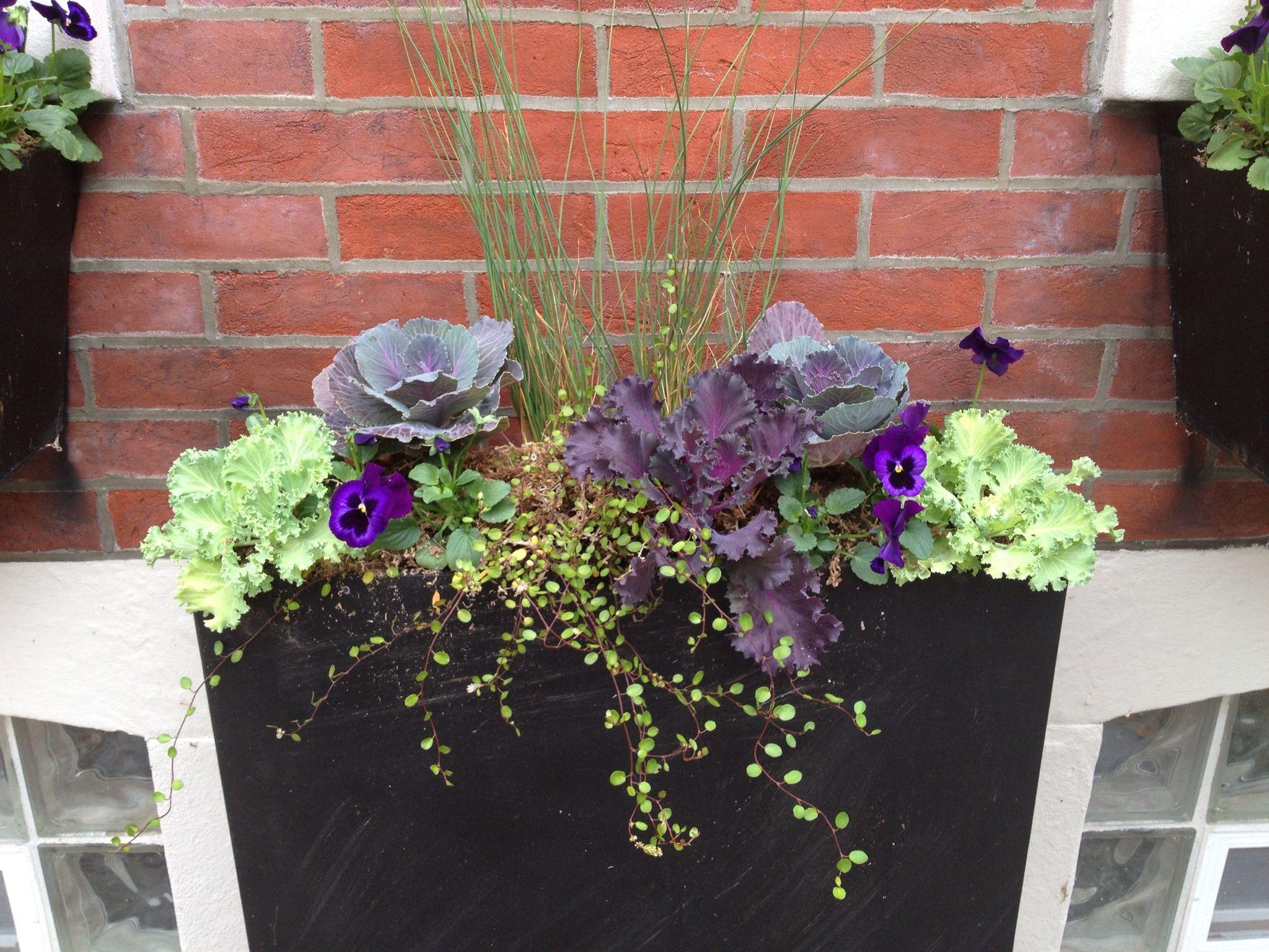 New fall planter Cabbage Window box PLANT Pinterest