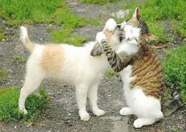 Cats And Kittens Playing Together Cat Haven Kittens Cats Cats