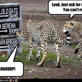 Funny Cheetah Jokes   funny   Pinterest   Cheetahs