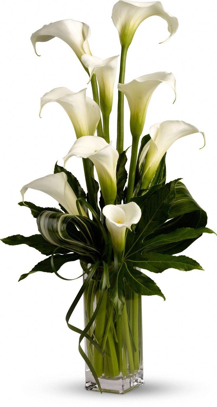 What do calla lilies represent flower arrangements flowers and flower what do calla lilies represent teleflora izmirmasajfo Image collections