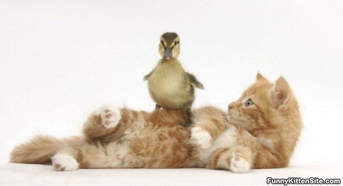 Got A Birdy - funnykittensite.com