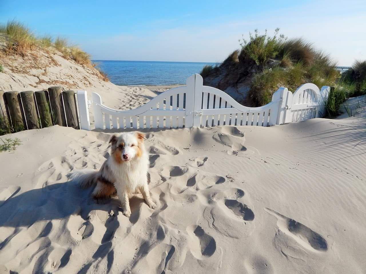 *Life* auf Usedom Urlaub mit Hund auf Usedom usedom