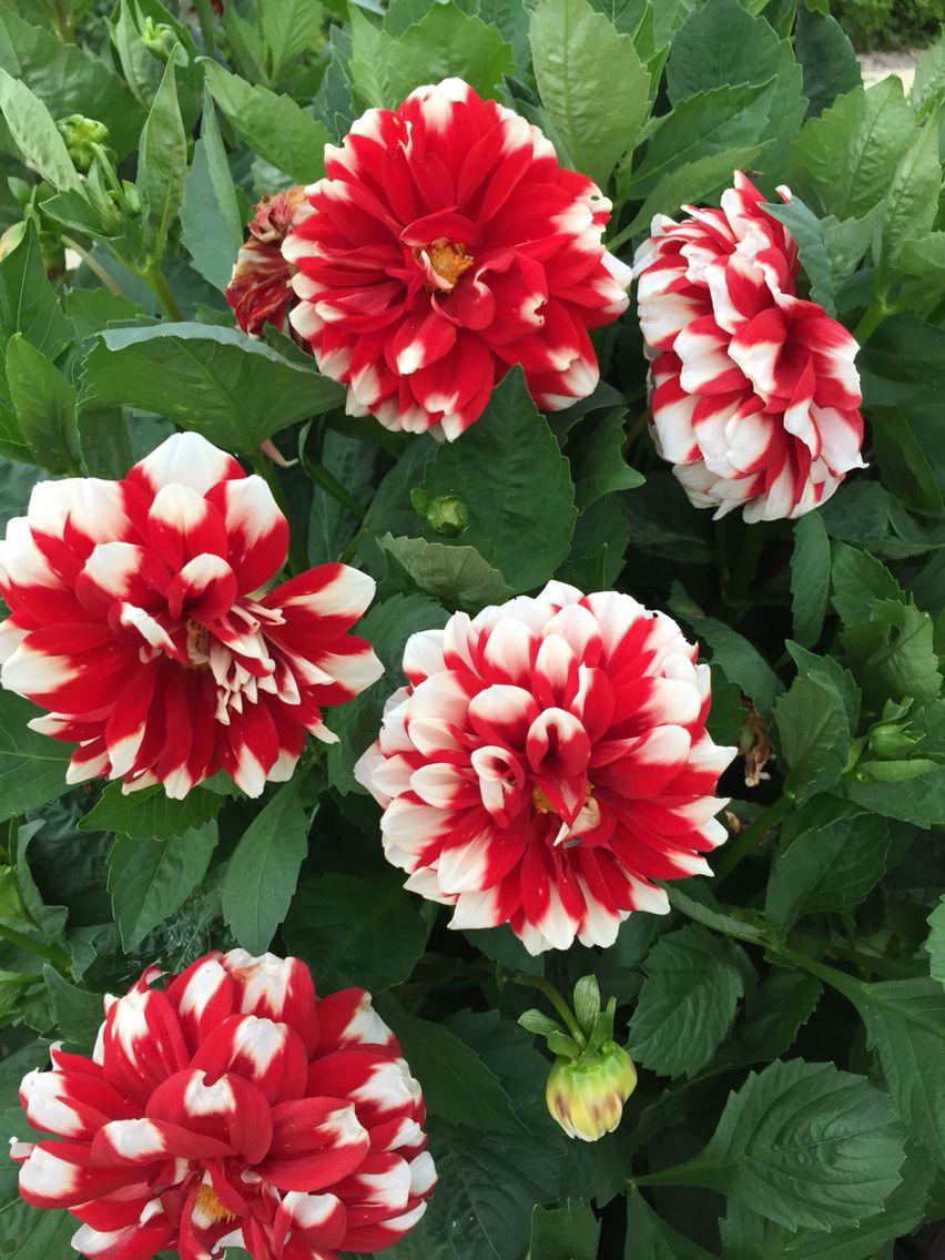 Blooms Speyer