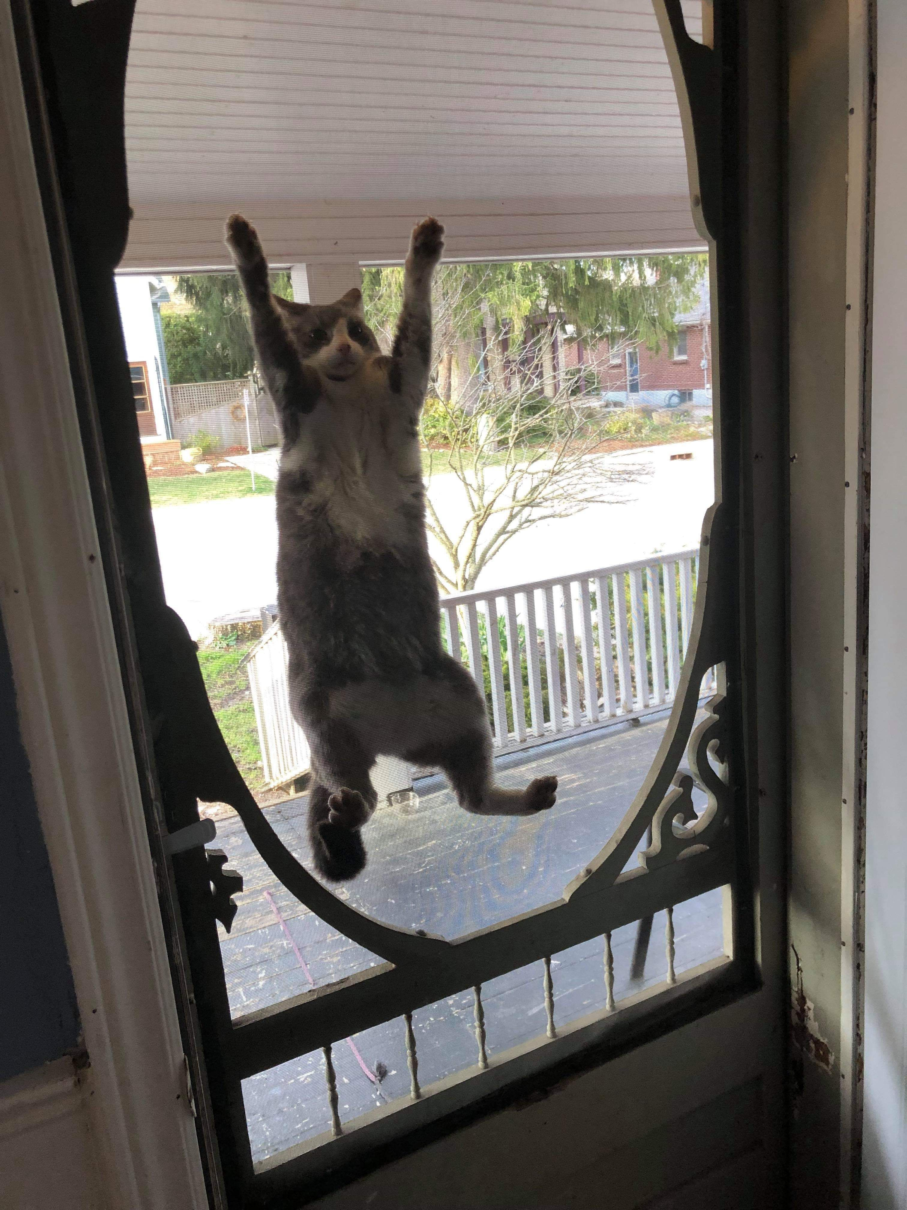 PsBattle This cat hanging from the door screen Animals