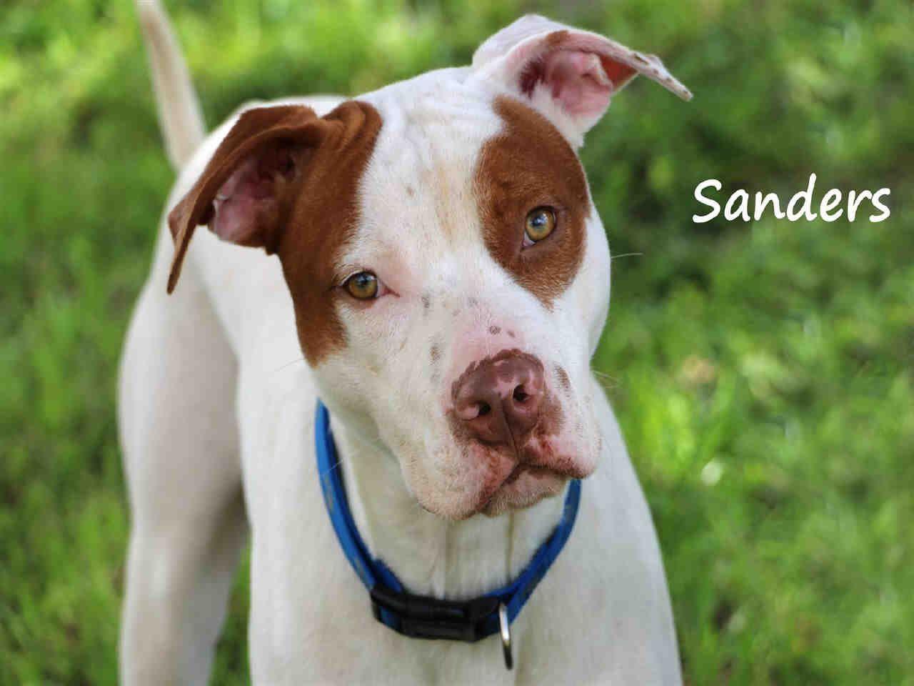 Adopt Charlie ADOPTED! on Petfinder Dog adoption, Fox