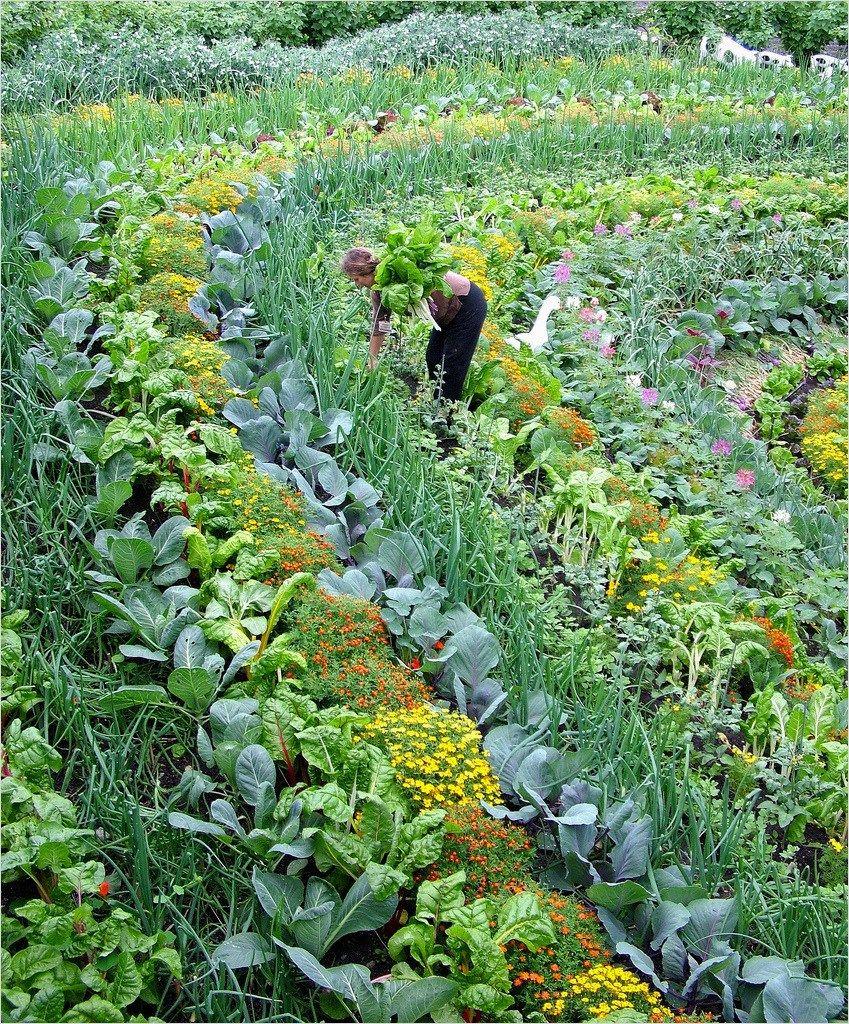 2f87e85dd028da6b6009c3c8bdc07354 - Best Vegetable Gardens In The World