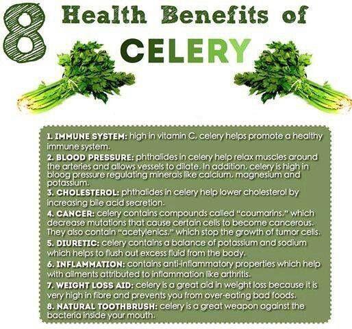 Celery Benefits | Food/Recipes | Health benefits Health ...