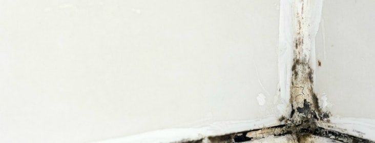 White Mold What Is It How Can You Get Rid Of It A Definitive Guide Wall Molding Remove Mold From Walls Mold Remediation