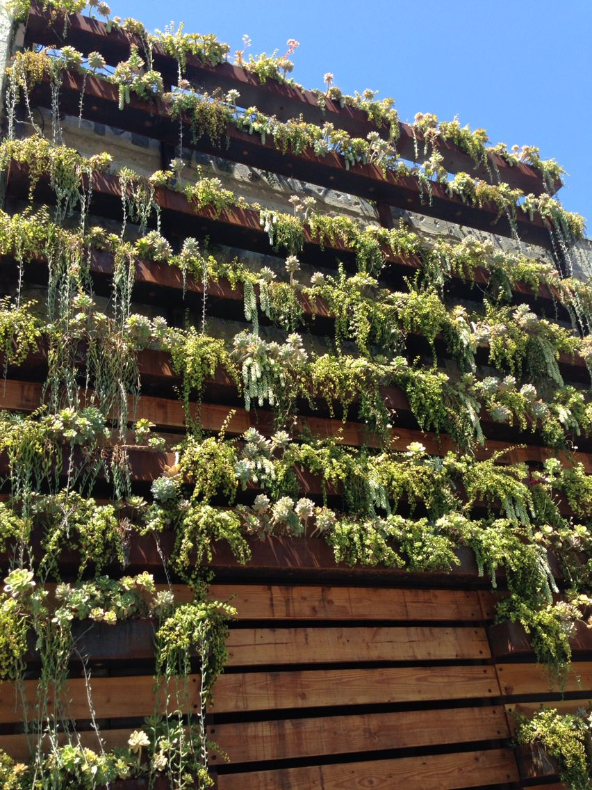 Succulent wall. Little Italy, San Diego CA | ✳ Succ It ...