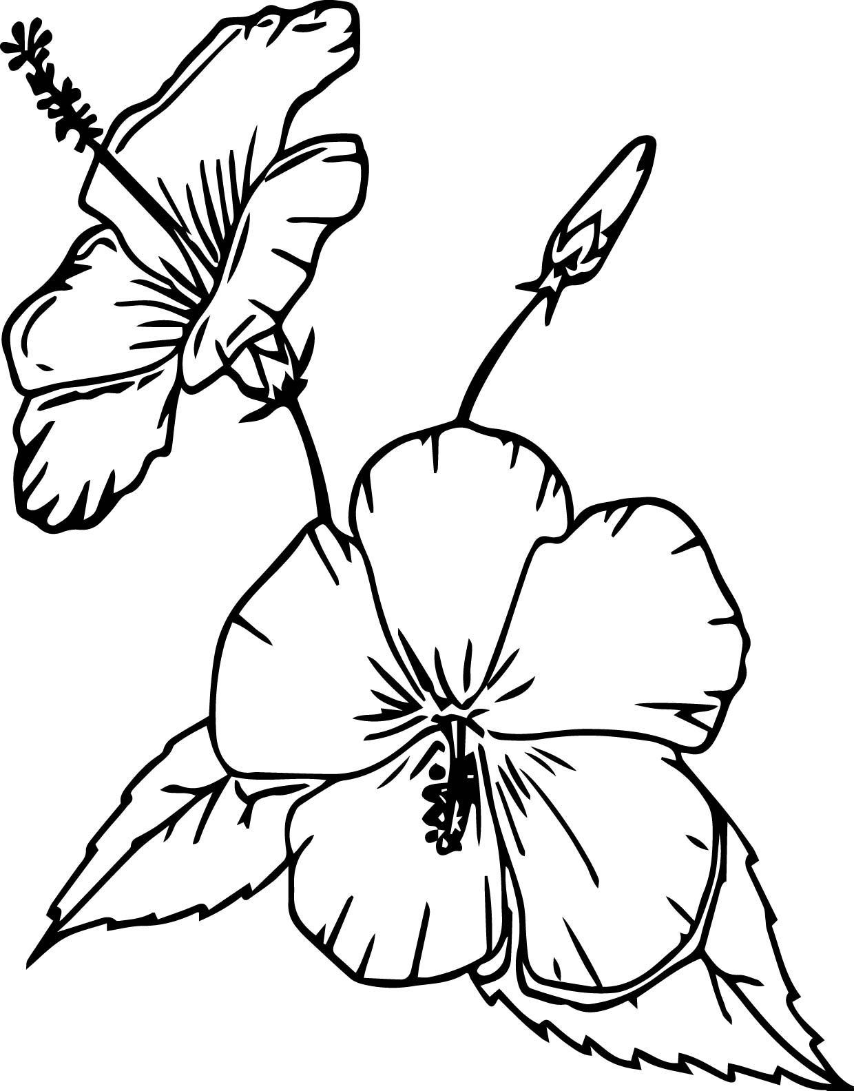 Cartoon Flowers China Rose Coloring Page Hawaiian Flower Drawing Rose Coloring Pages Printable Flower Coloring Pages