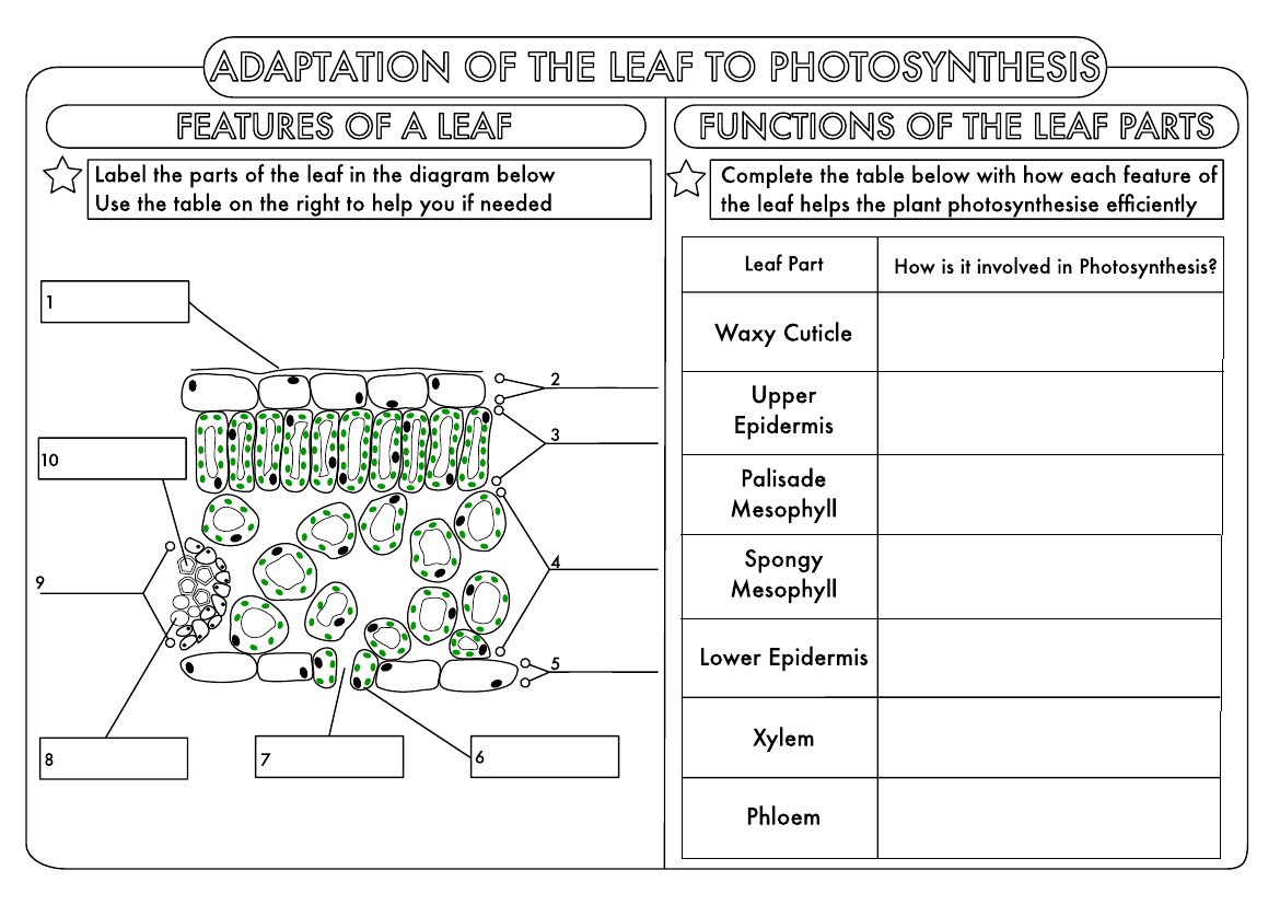 Huge Gcse Biology Worksheet Pack
