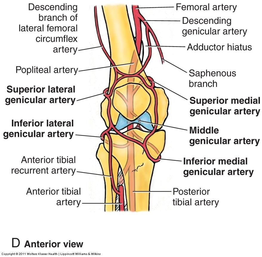 image ess_knee for term side of card | PA | Pinterest