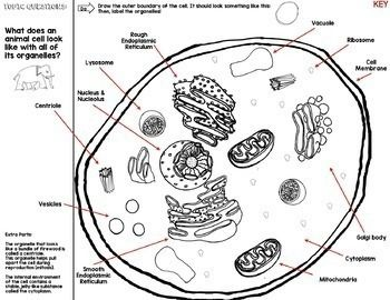 Cell Organelles Cornell Doodle Notes City Analogy with