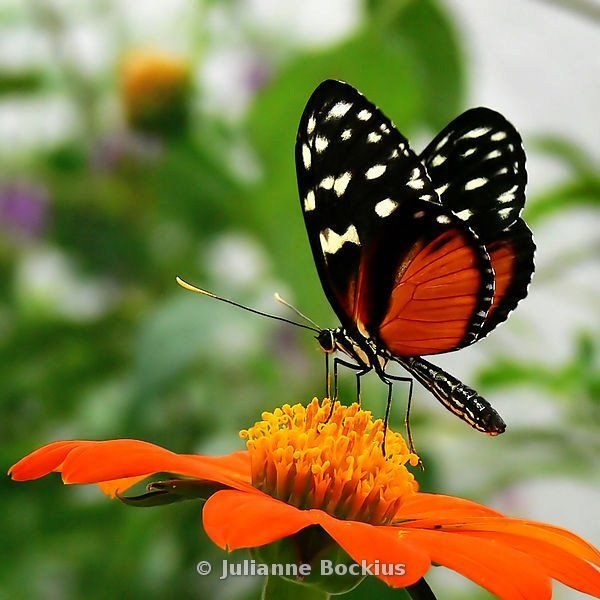 May the wings of the butterfly kiss the sun  And find your shoulder to light on,  To bring you luck, happiness and riches  Today, tomorrow and beyond.  ~Irish Blessing    Photo: Julianne Bockius