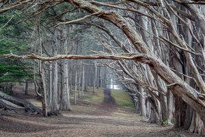 Moss Beach Cypress Trees Fitzgerald Marine Reserve 4814 Moss Beach Bay Photo Moss Beach Distillery