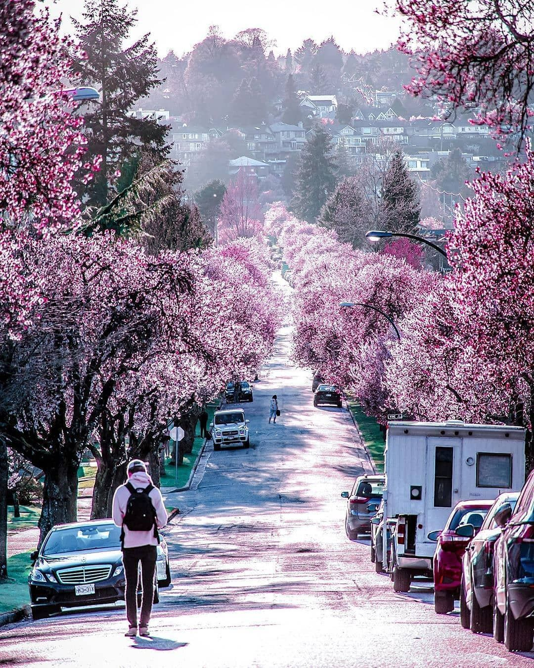 Enjoy With Canadaparadise On Instagram An Absolutely Pink Cherry Blossoms Spring Tag Someone Likes Comments