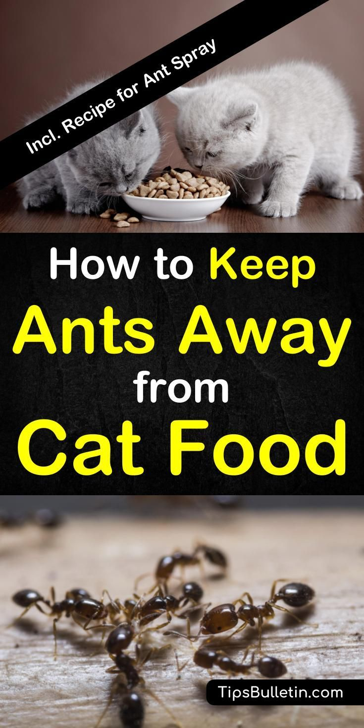 7 quick easy ways to keep ants out of cat food cat