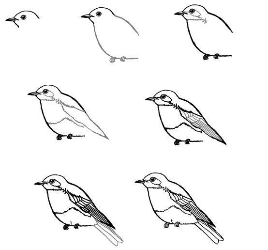 Eastern Bluebird Artbirds And Fish Drawings Drawing