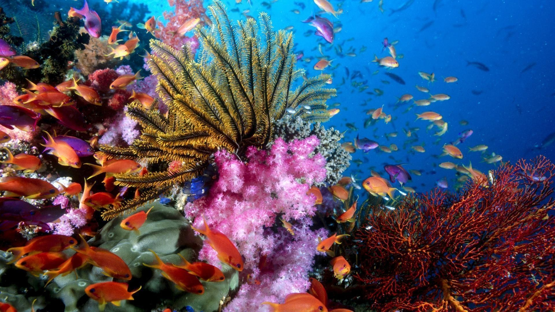 10 New Colorful Coral Reefs Wallpaper Hd Full Hd 1080p For Pc Desktop Coral Reef Photography Sea Life Wallpaper Coral Wallpaper