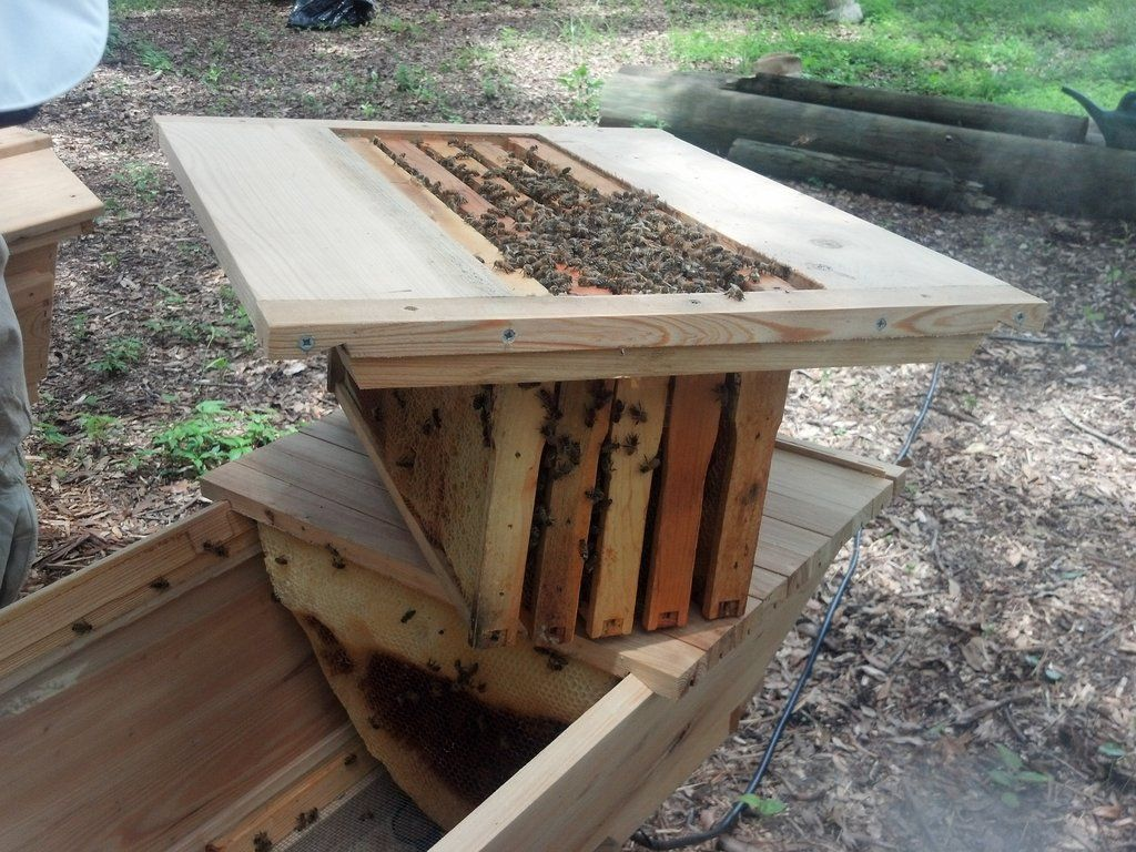 A Simple Rack That Holds 5 Langstroth Frames Neatly In Our Top Bar Hives  Until The Colony Builds Out The Remaining Bars.
