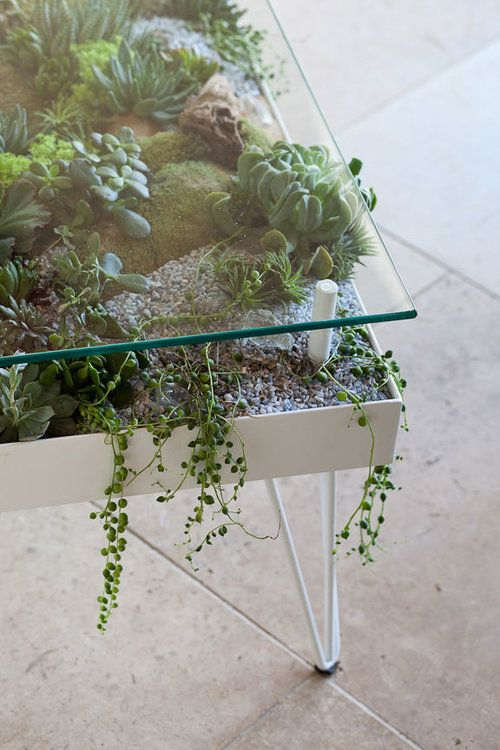 Terrarium Coffee Table Plants Pinterest Home Decor Home And