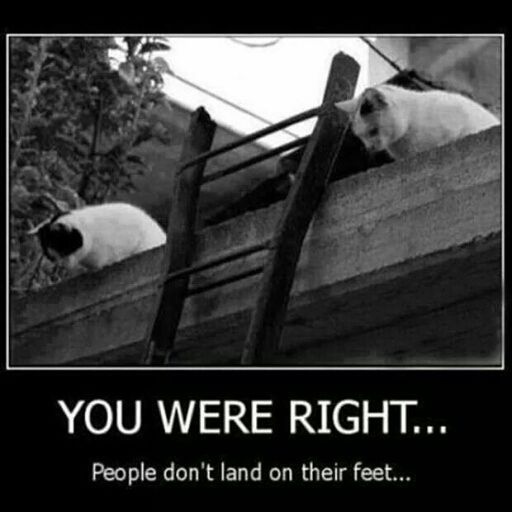 What Cats Think When A Human Falls Off A Ladder | Evil cat ...