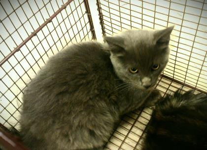 Petango Com Meet Joseph A 3 Months 15 Days Domestic Medium Hair Mix Available For Adoption In Tampa Fl Cat Shelter Animals Pets