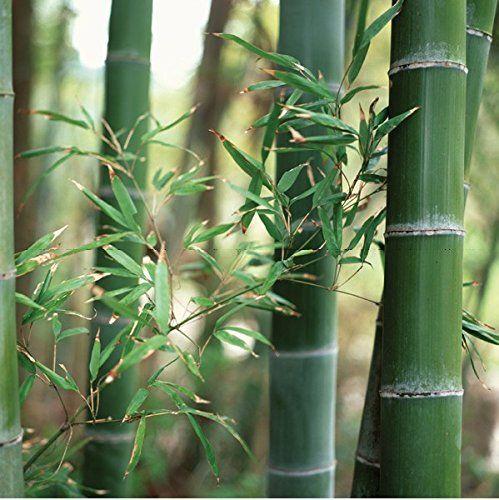 Statische Fensterfolie JOY static Dekorfolie Bamboo Bambus Meterware 45 cm