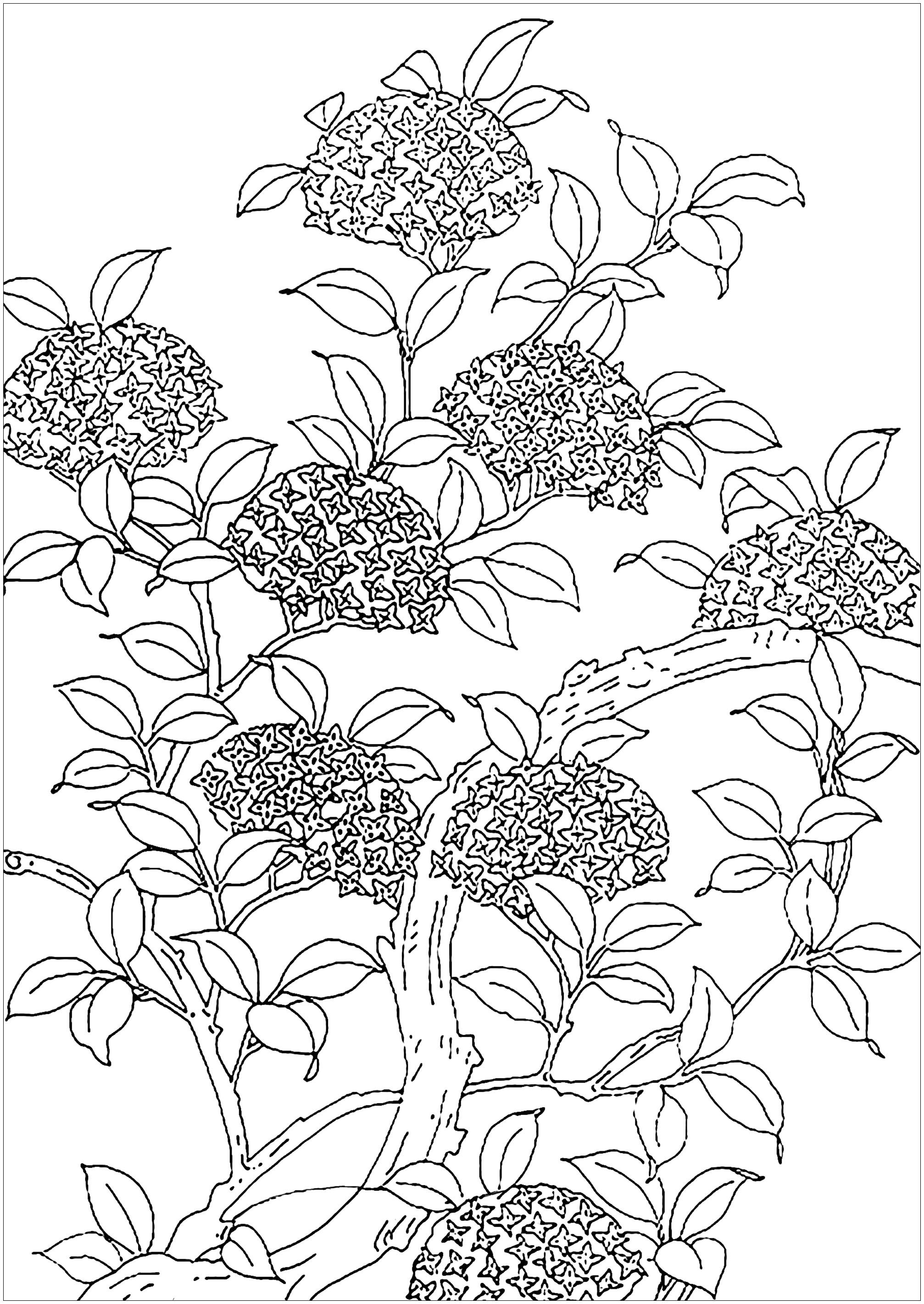 Flowered tree - Flowers & vegetation Coloring Pages for ...