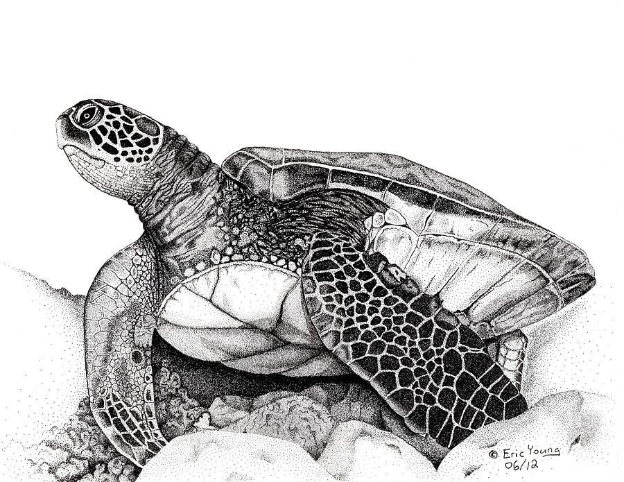 Turtle Line Drawing Tattoo : Hawaiian sea turtle eric young featured and