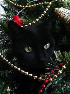 cat - Black Cat Christmas Tree