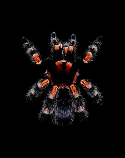 Spider 虫 グラフィックス