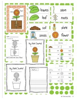plants a science unit for primary students primary grade science fun preschool science. Black Bedroom Furniture Sets. Home Design Ideas