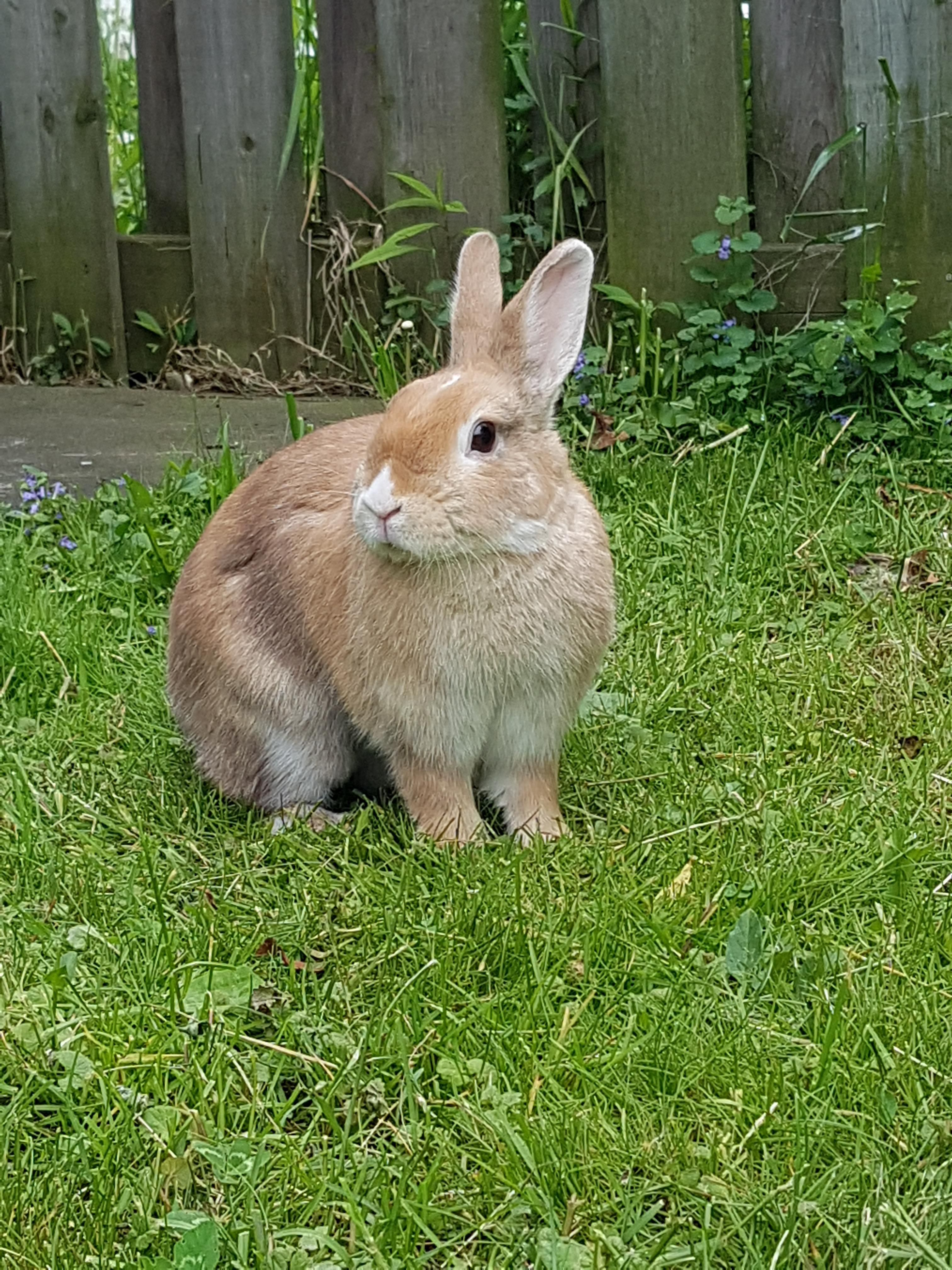 Loving The Great Outdoors Rabbits Are Not An Ideal Pet For Children Rabbits Are A 12 Year Commitment Rabbits Need Rabbit Cute Bunny Rabbit Eating