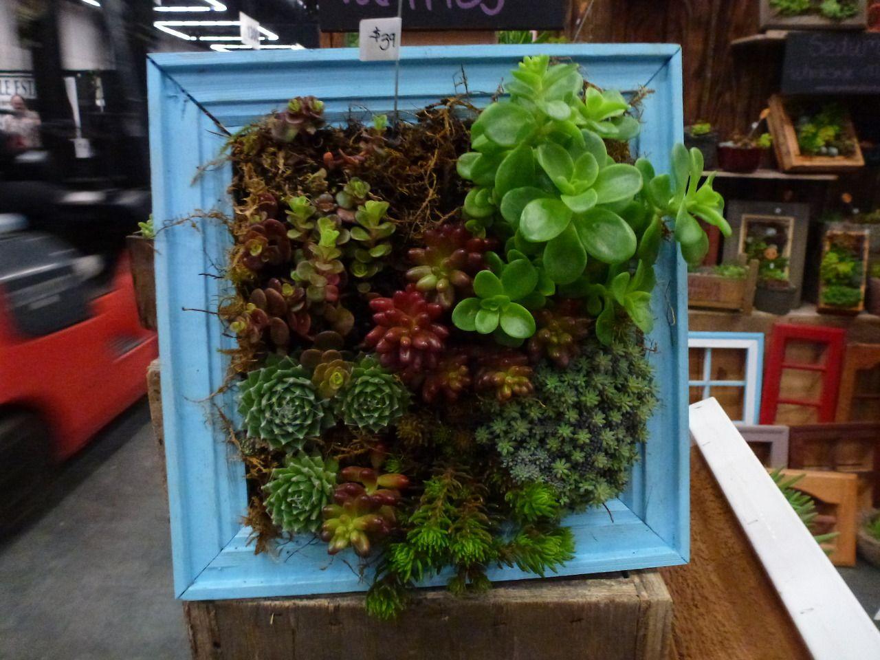 Creative Framed Succulent Arrangement By Sedum Chicks At Portlandu0027s Yard,  Garden And Patio Show.